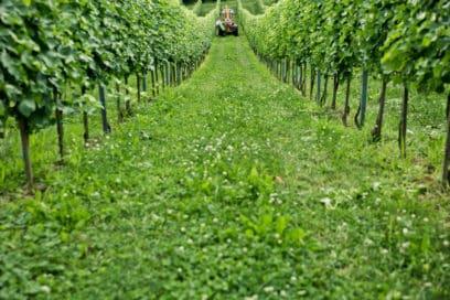 Traktor in grünen Weingärten