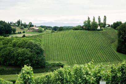 grüne Weinhügel